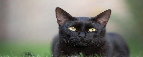 Wenn eine schwarze Katze deinen Weg kreuzt oder wieso ein Helm leben retten kann